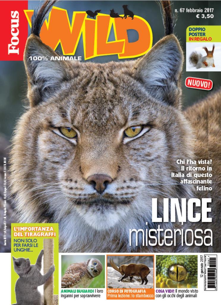 Cover Focus Wild